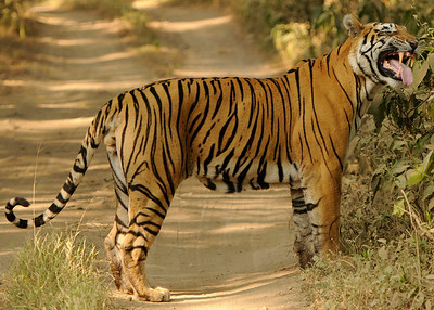 Wildlife of India 2012